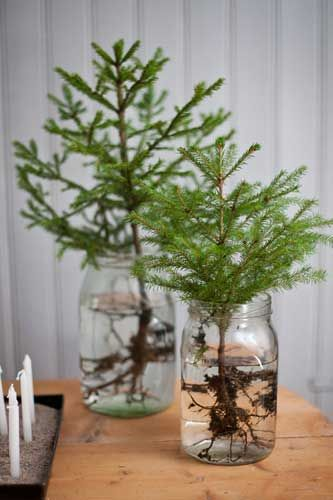 cozy Christmas | evergreen branches Hygge nature decor | Girlfriend is Better