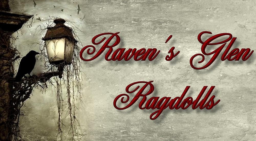 Raven's Glen Ragdolls