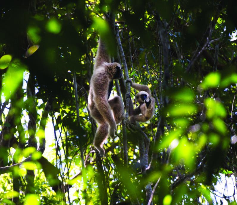 Bringing back Angkor's wild side