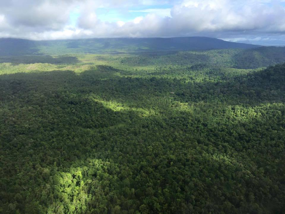 New Carbon Credit Deal will Protect the Southern Cardamom Rainforest