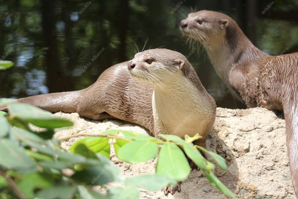 Waterfall for World Otter Day 2017