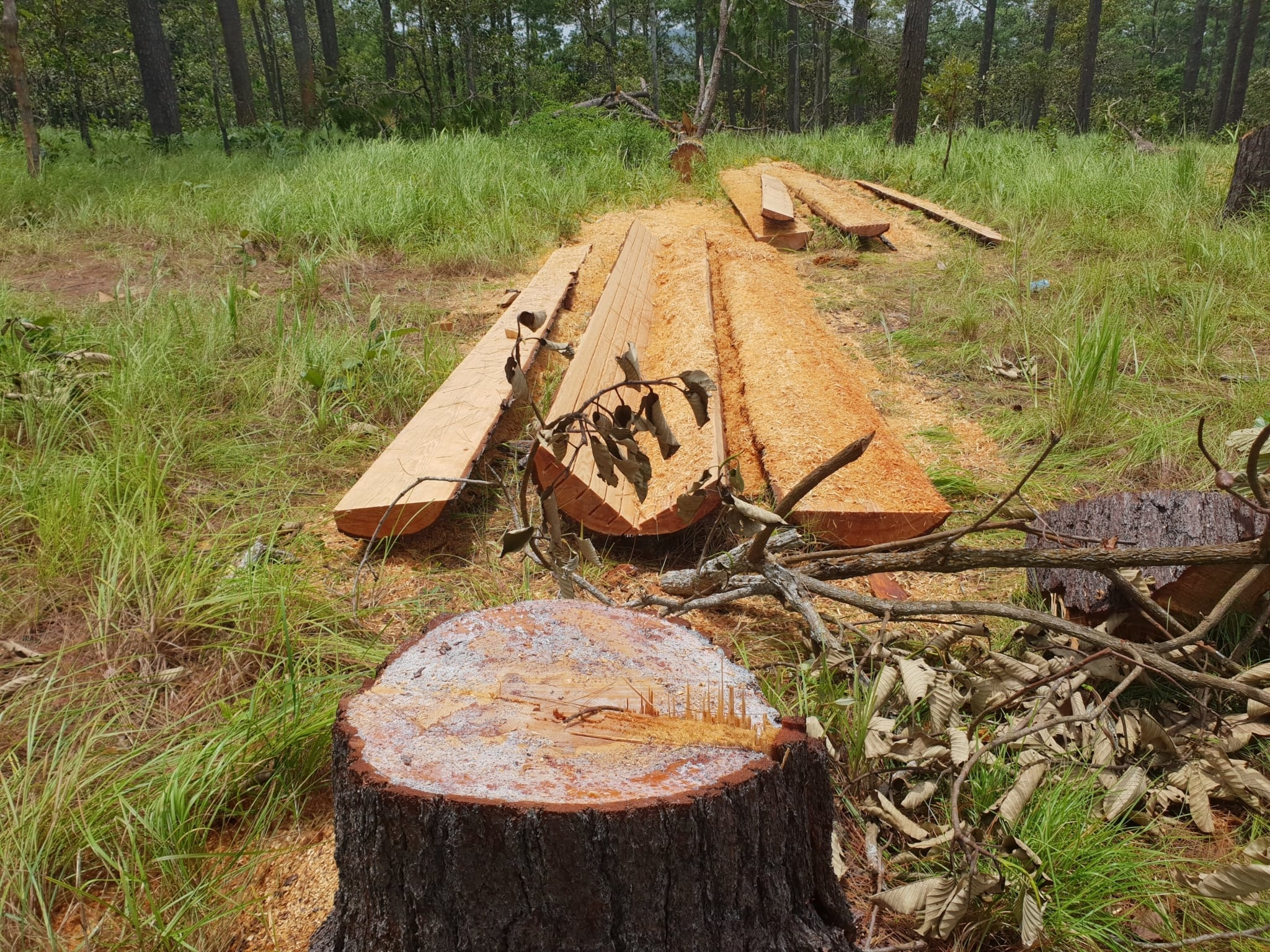 More than 600 chainsaws confiscated in 2017 – Dr. Tom Gray