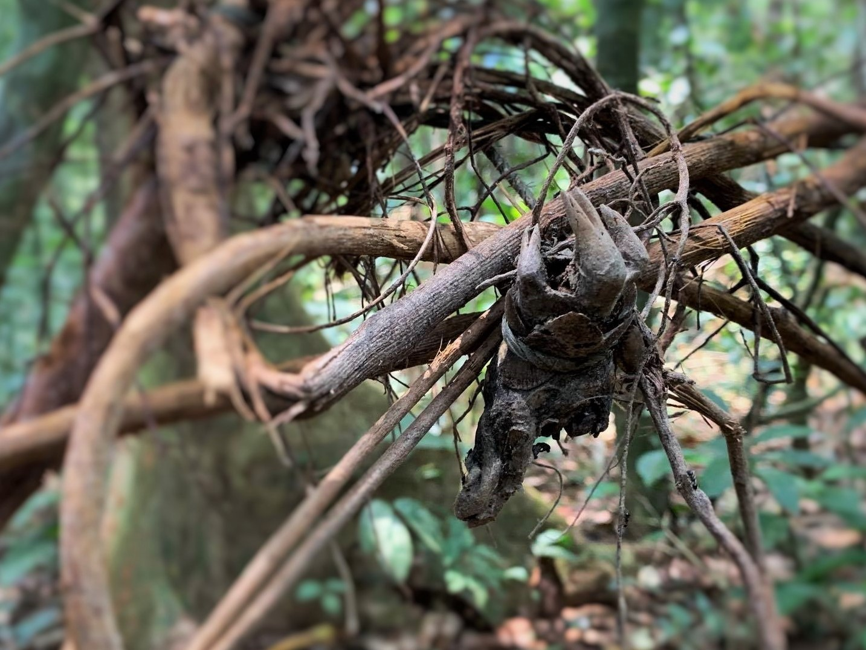 traps kill animals