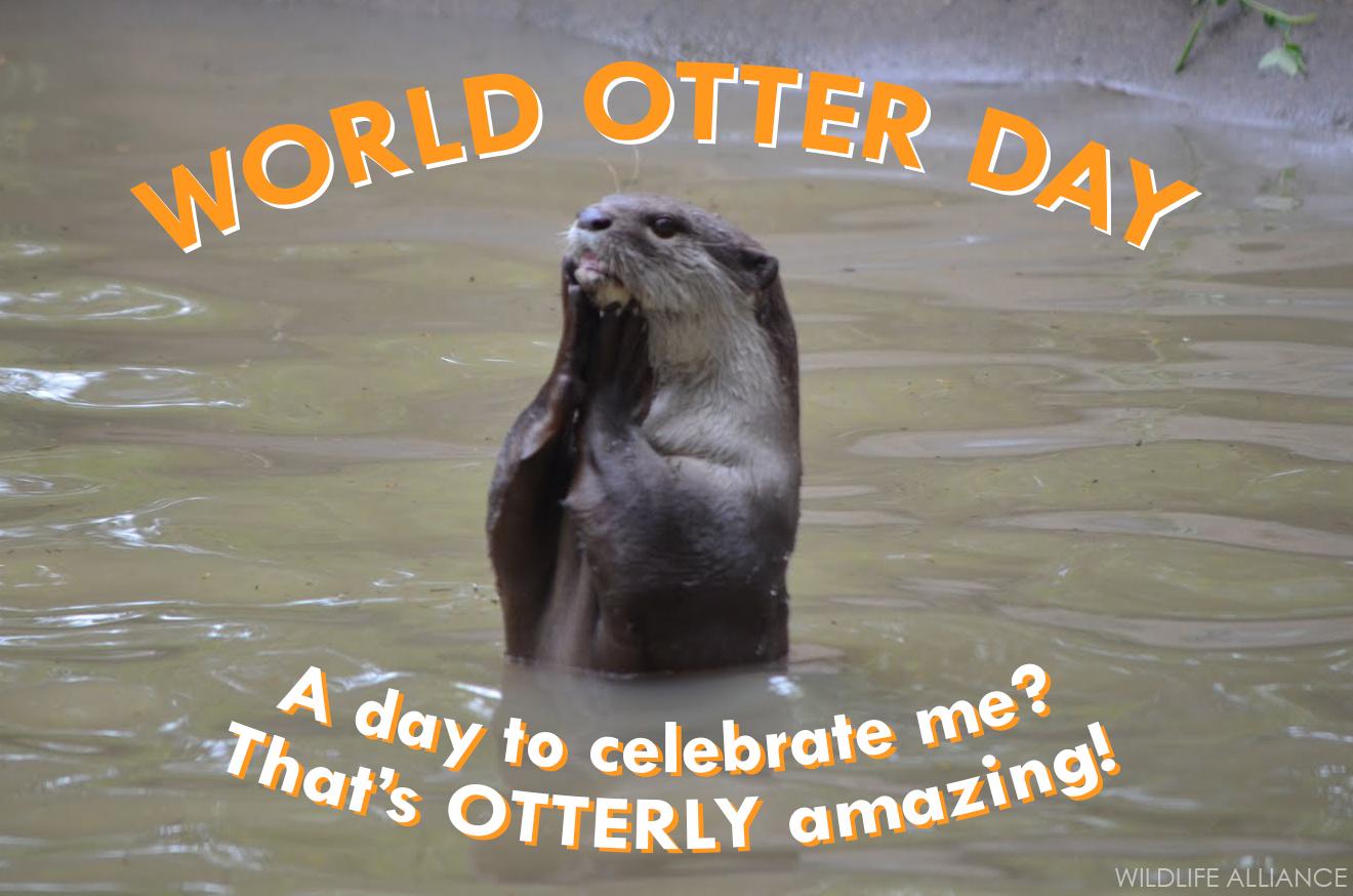 Happy World Otter Day – May 29, 2019