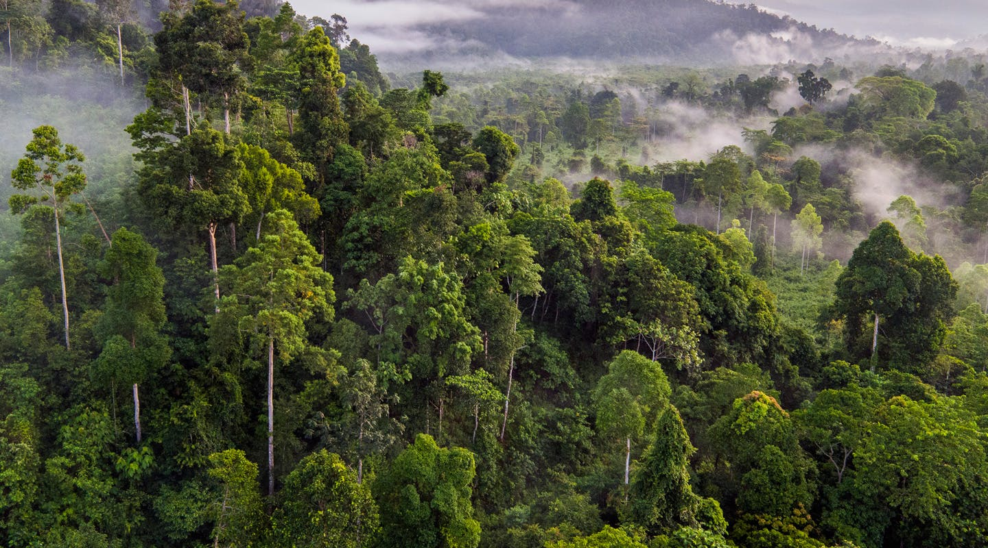 A guide to visiting Cambodia's Cardamom Mountains
