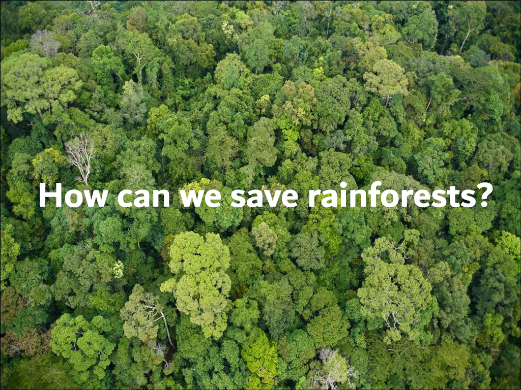 How can we save rainforests?
