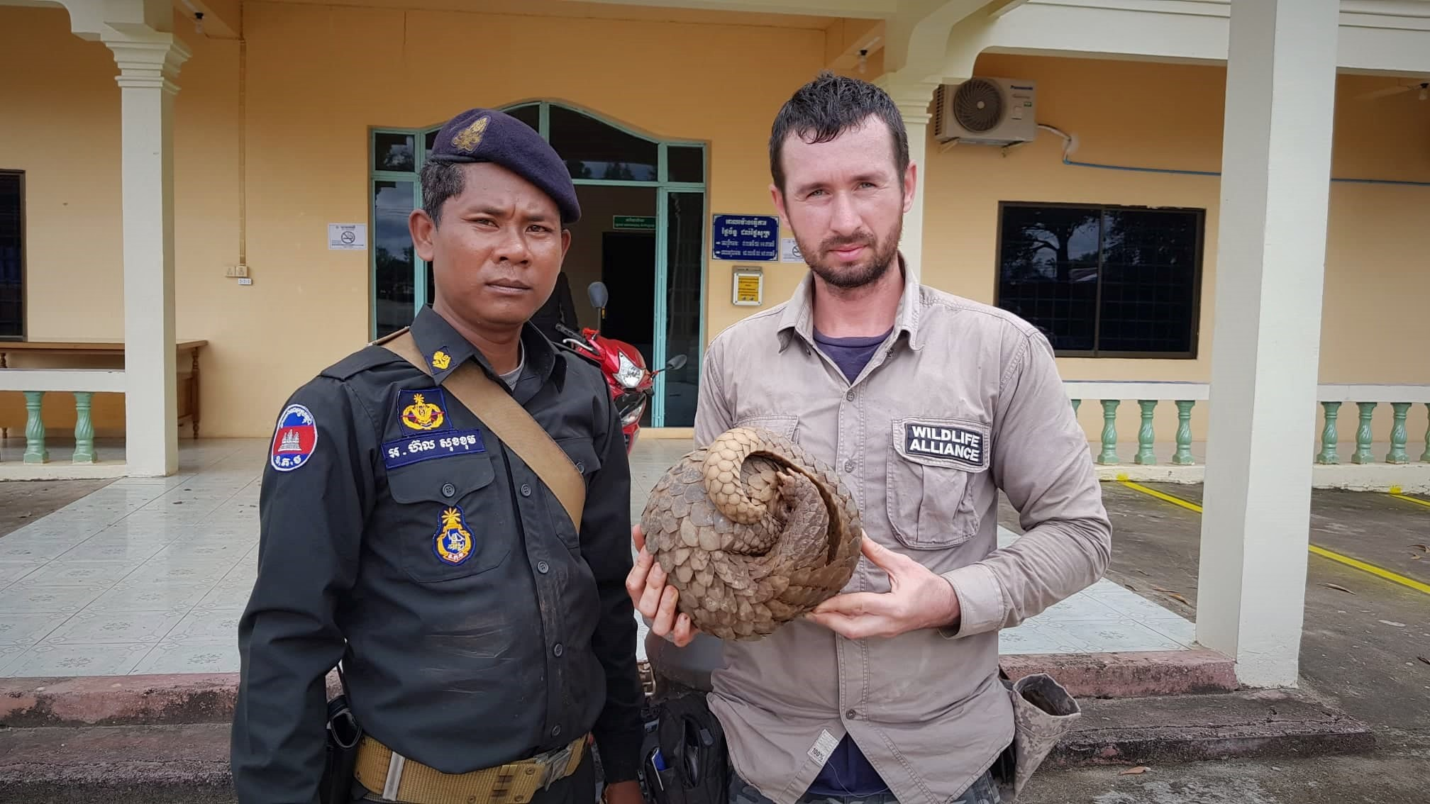 Critically Endangered pangolin