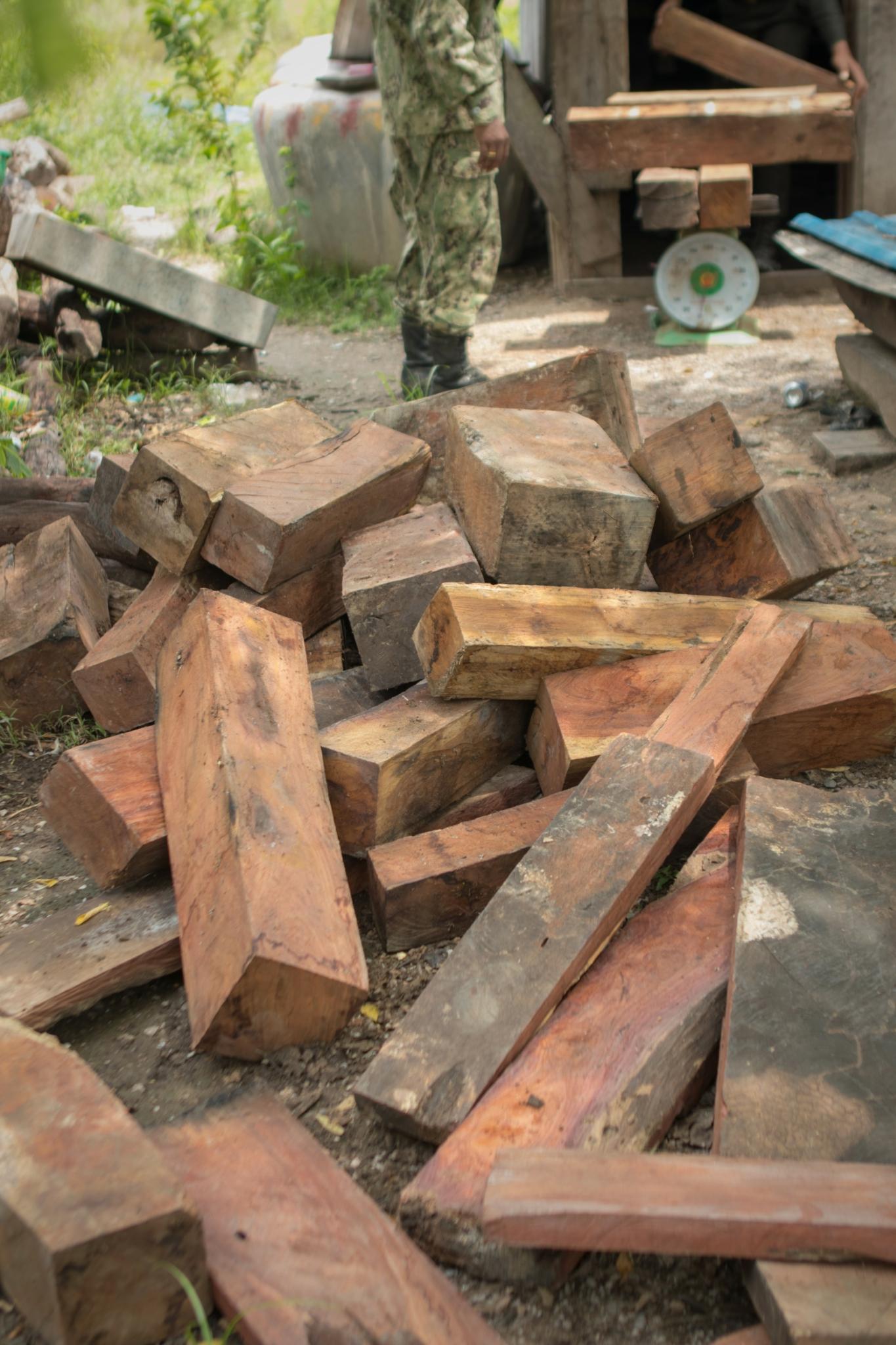 Luxury timer stock Pterocarpus Macrocarpus