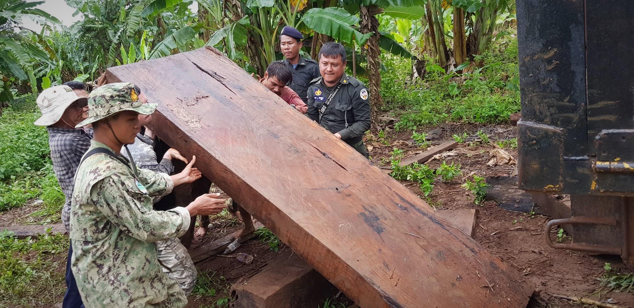 Endangered tree species timber