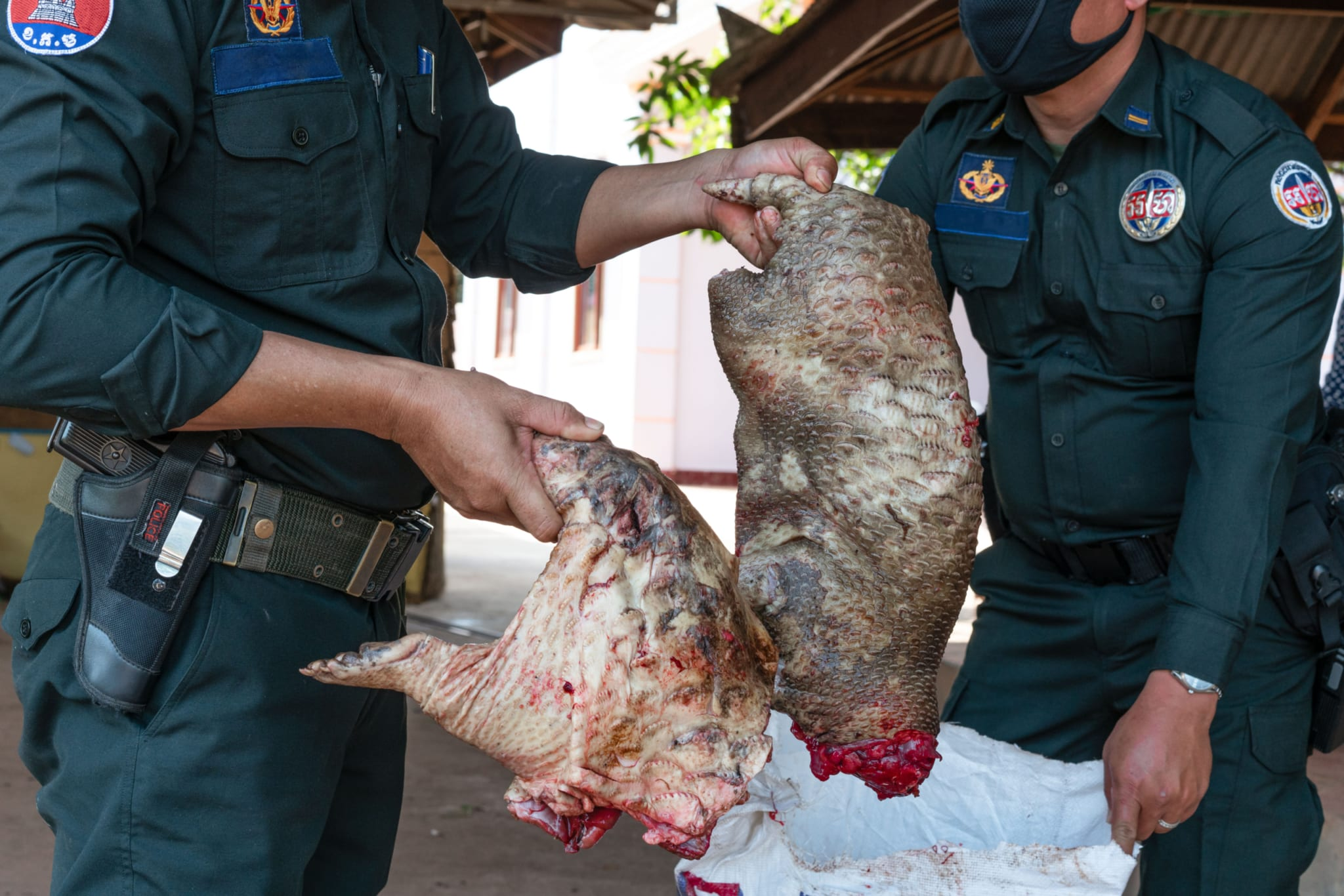Calls for an end to Cambodia's wildlife trade in response to the coronavirus