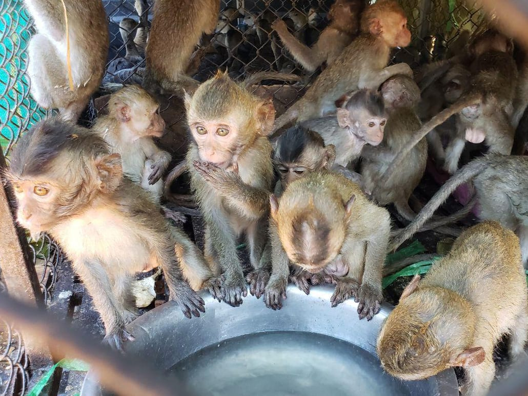 500+ animals rescued from Illegal Wildlife Trade – Emergency funding needed for their care
