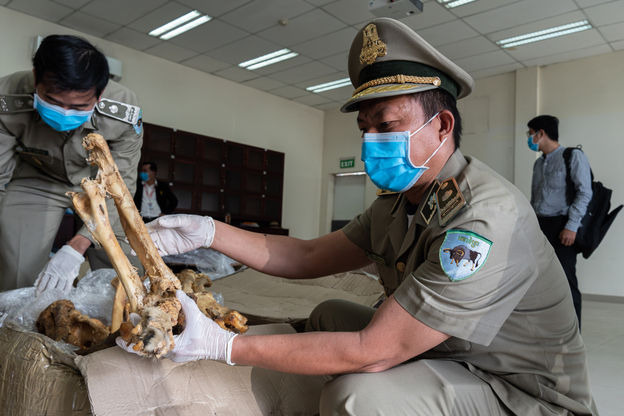 Major shipment of suspected lion bones opened
