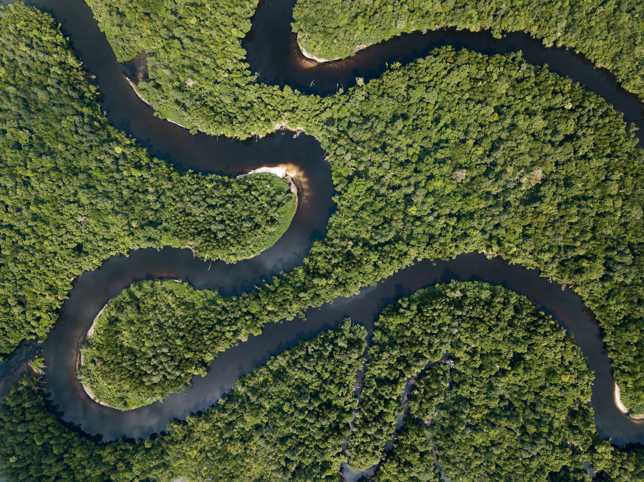 5 ways you can help save rainforests in Asia