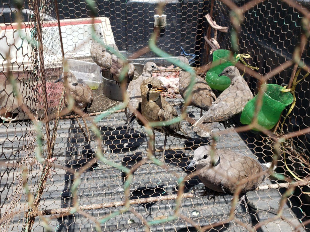 Almost 400 birds confiscated in raid