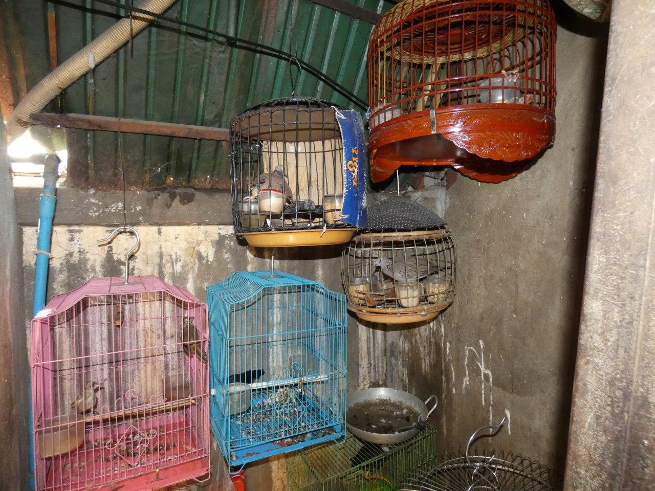 Birds in the illegal wildlife trade in Southeast Asia