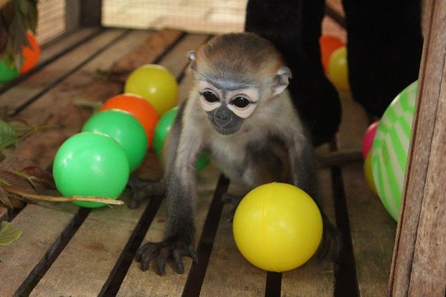 Plight of the Primates in the illegal wildlife trade