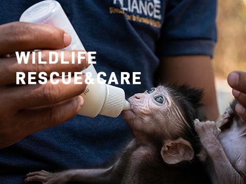 Wildlife rescue and care mobile