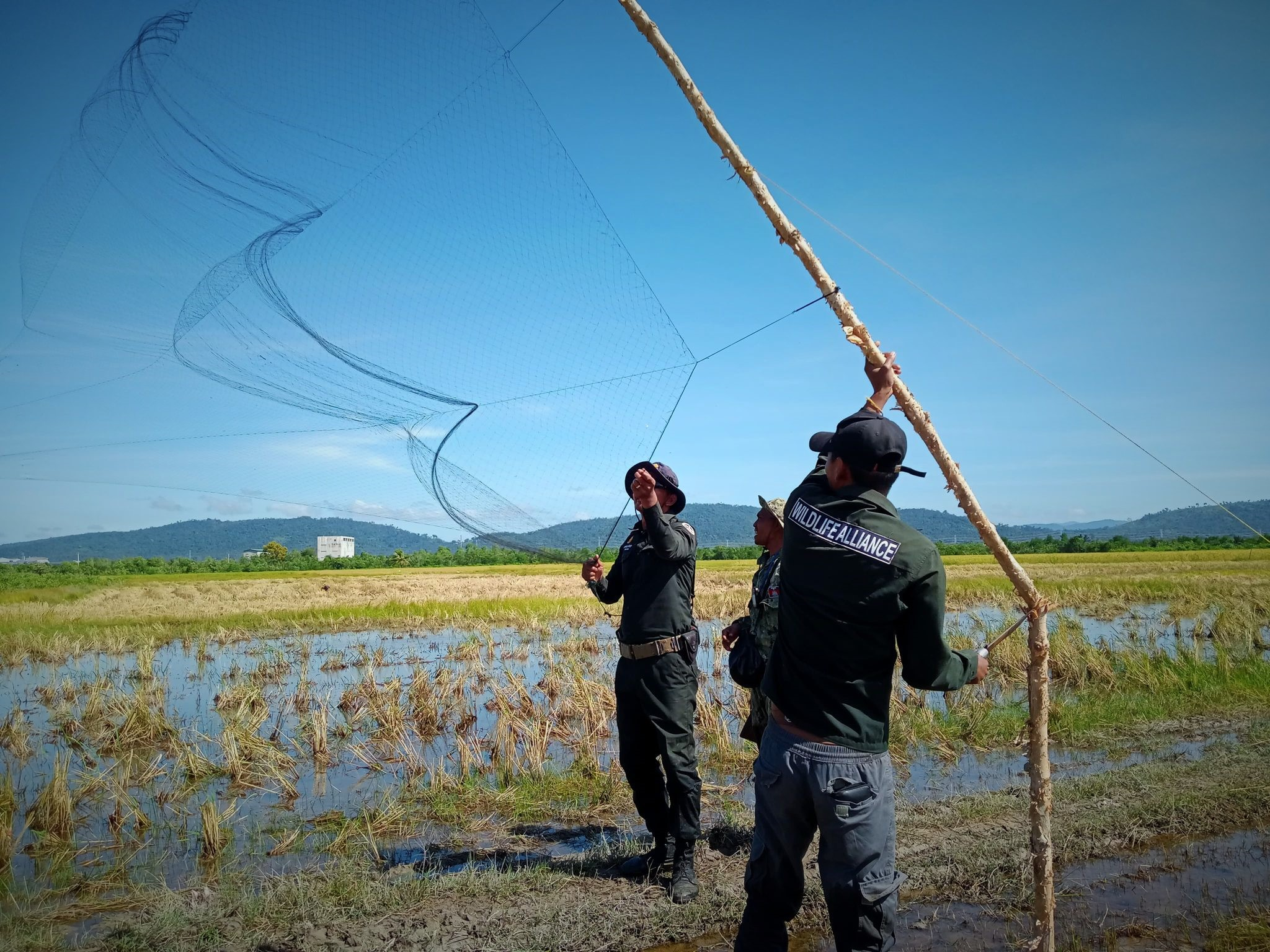 Bird netting leads to extermination