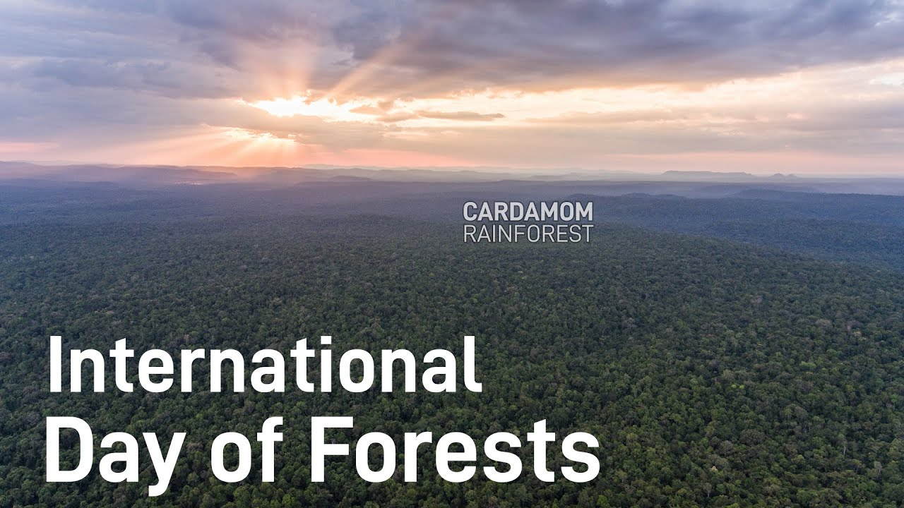 International Day of Forests
