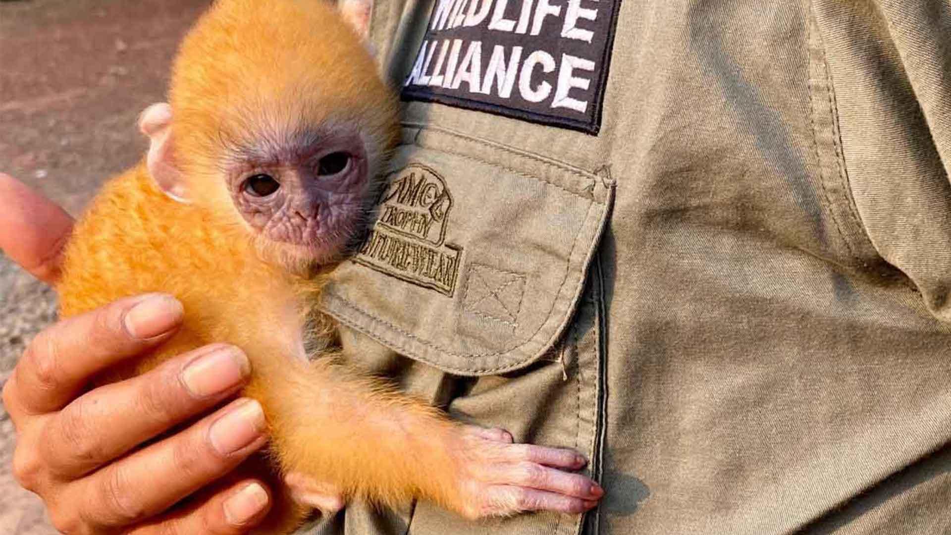 Park Rangers rescue Wildlife