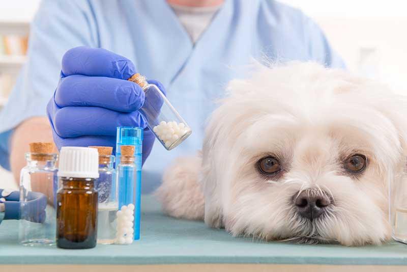 Oak Harbor Veterinary Hospital: Pharmacy