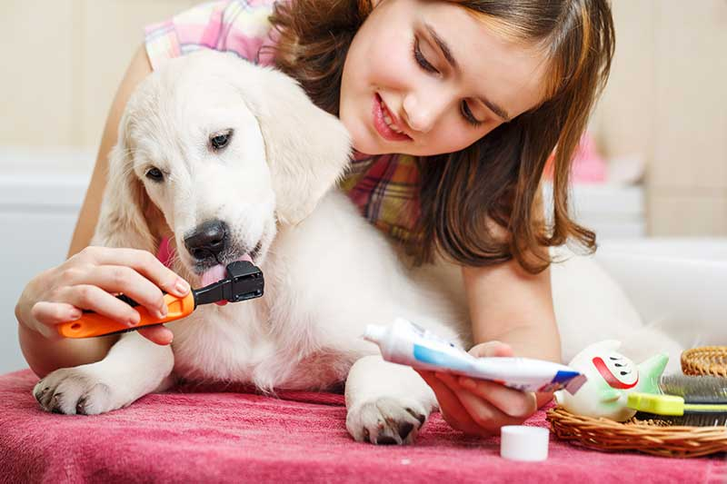 Girl Cleaning Teeth of Dog