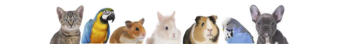 Oak Harbor Veterinary Hospital: Small Animal Slider