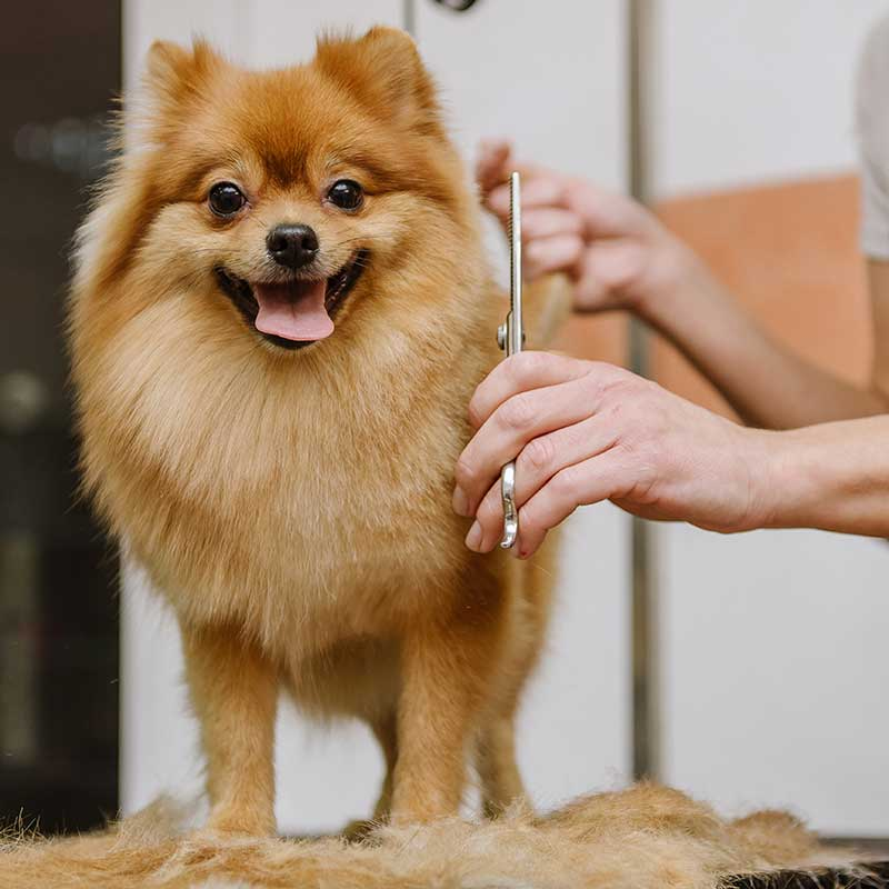 services_groomingsmalldog
