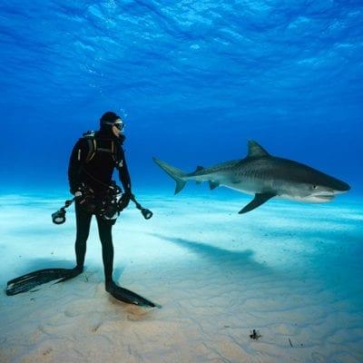 Brain Skerry Scuba Diving