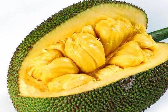 "Transcript for ""Jackfruit - A Jack of All Fruits"" Podcast"