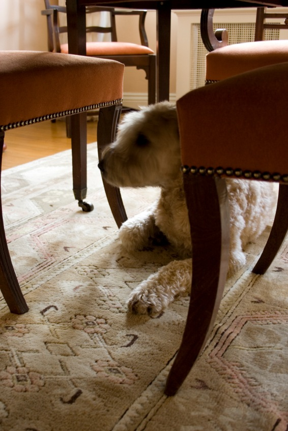 Inside Tips For Hiring a Professional Carpet Cleaner