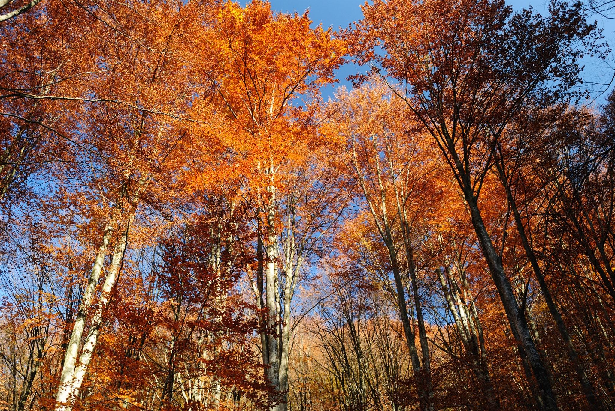 The Fall Season Cleanup Checklist