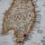 Viajar a Australia ¿qué necesito para hacerlo?