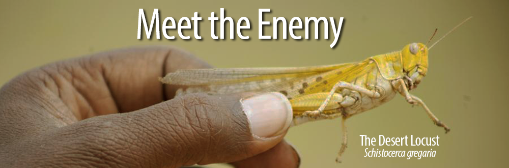 meet the enemy1000