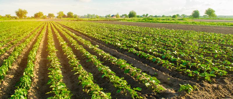 What You Should Know Before Starting a Farm on Your New England Property
