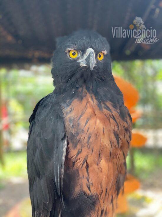 sitios turísticos en Villavicencio-los Ocarros