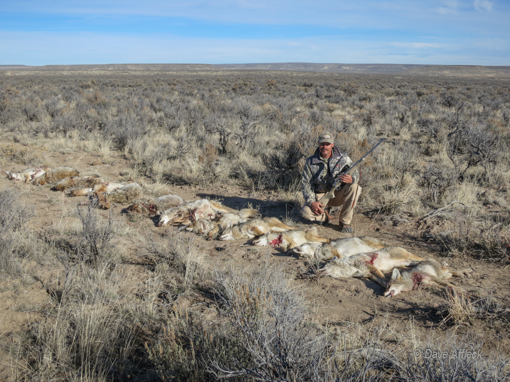 DAA with beloved .17 Predator and 14 dead coyotes