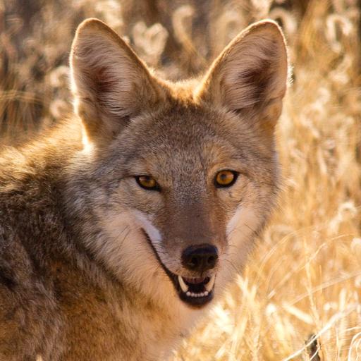 coyotestuff.com