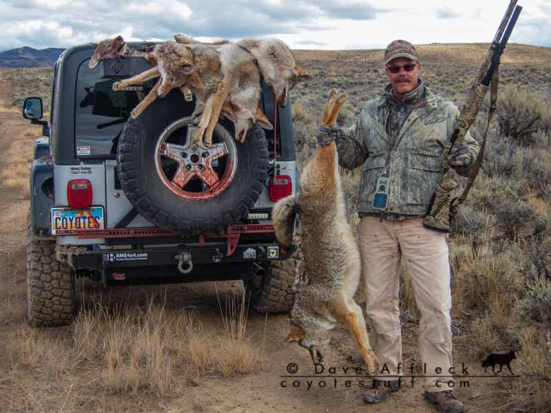 Good day coyote hunting