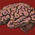 Neuroleadership:  Lead Smarter, Not Harder
