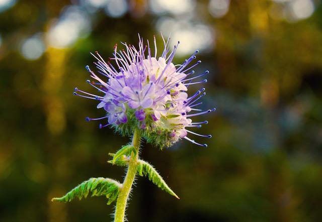 flower_nantucket-resize