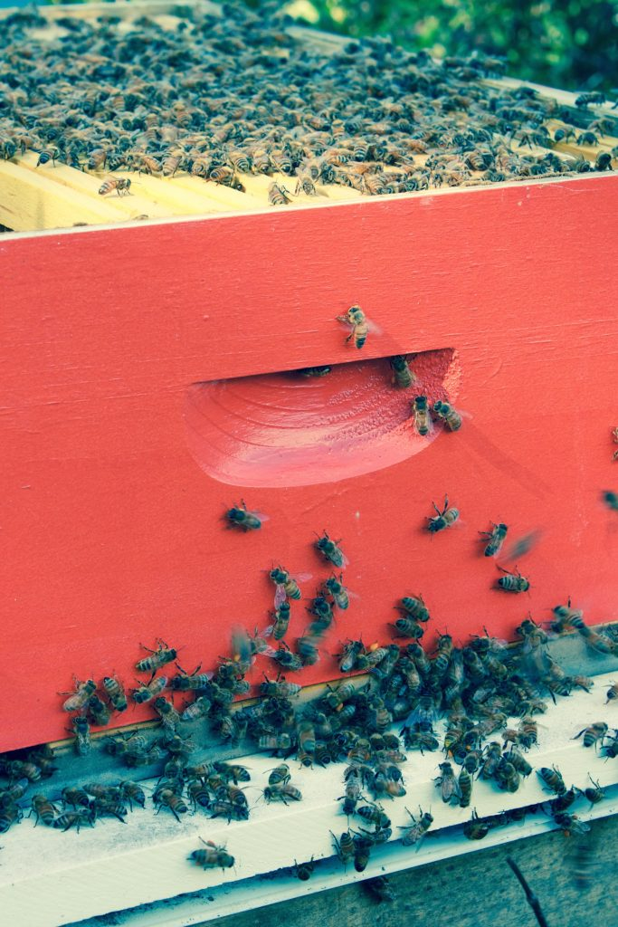 nantucket-bee-local-bees