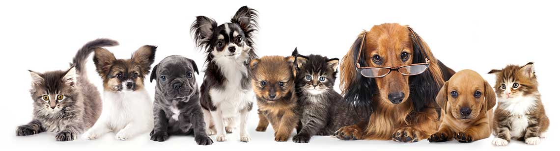 cats_dogs_wearingglasses