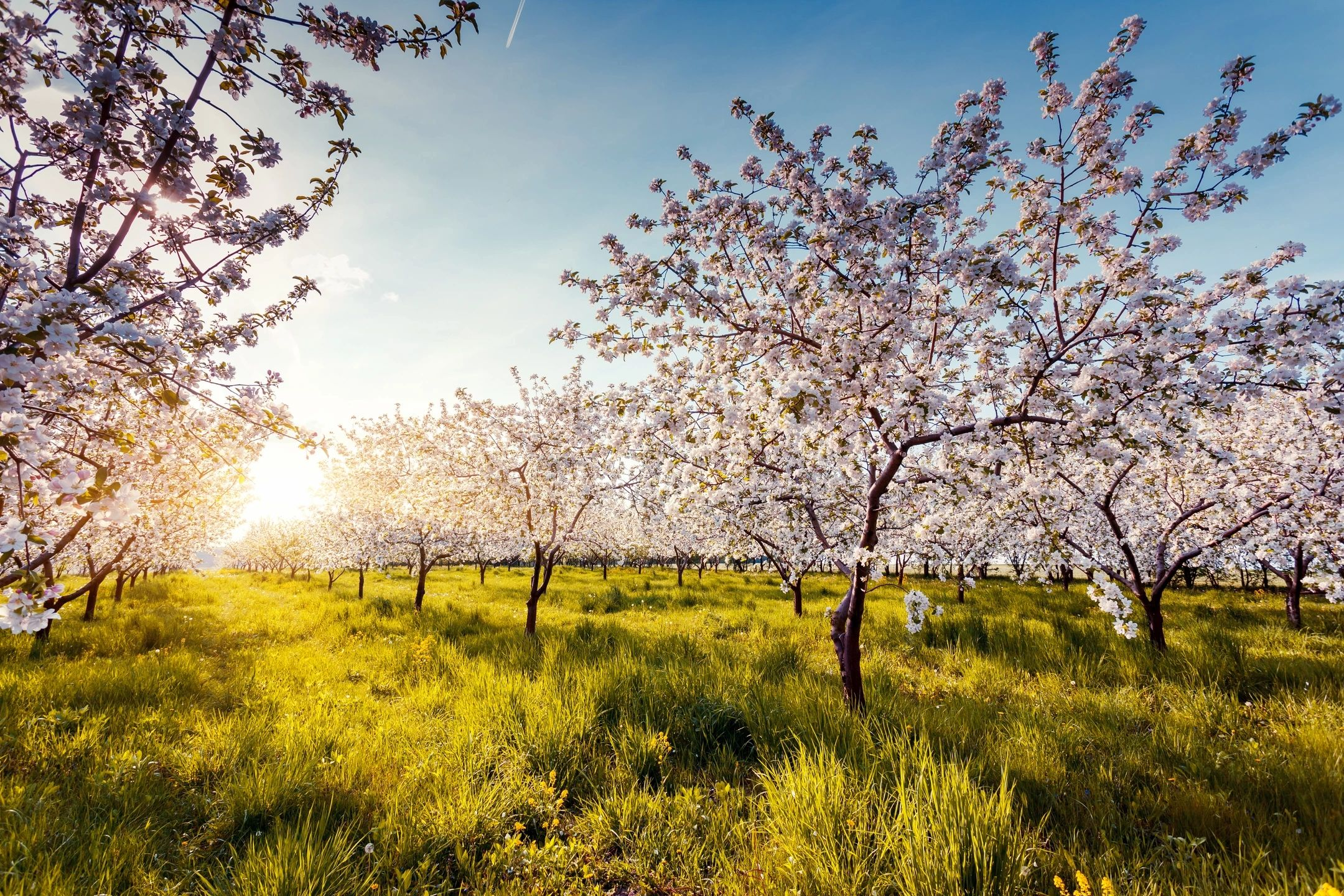 The Spring Season is a Time of Change: How To Accept Change in Your Life
