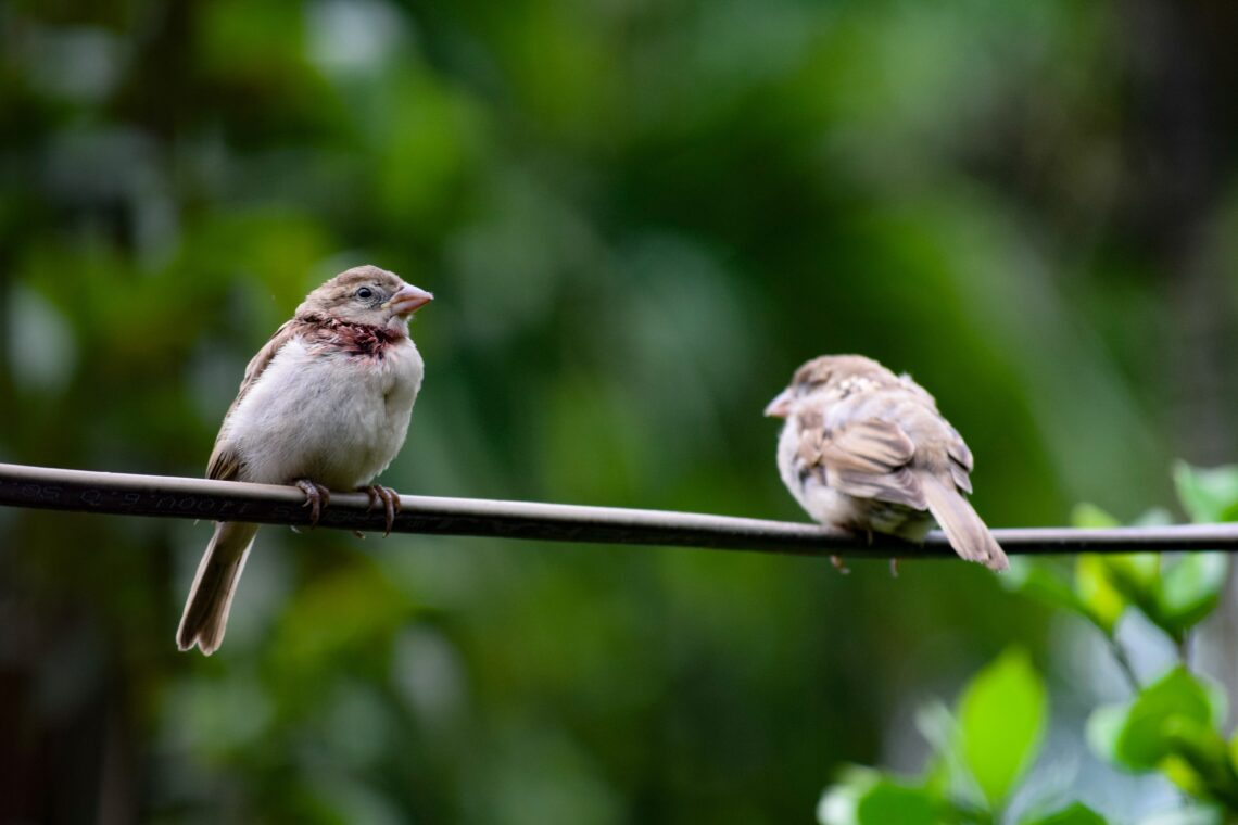 The Sparrow In His Care