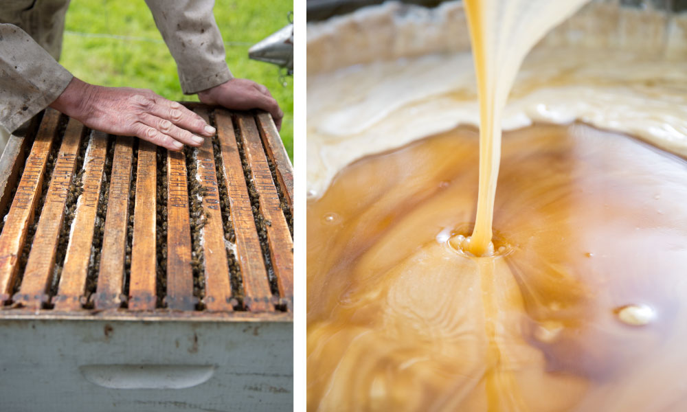 Open bee hive; raw Northern honey