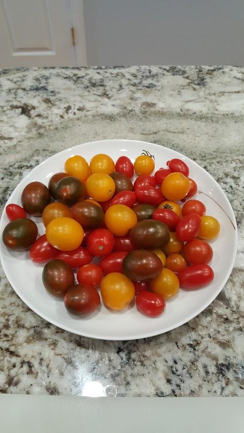 Tomato 2017
