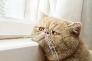 cats hide illnesses