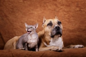 arthritis in cats and dogs