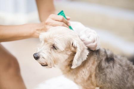 flea and tick treatment
